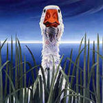 Fowl Look